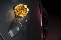 beautiful dry white rose on sport car handle Royalty Free Stock Photography