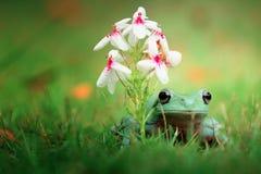 Beautiful Dumpy tree frog lonely Stock Image