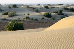 Beautiful dunes of Thar desert during sunrise,Rajasthan,India Royalty Free Stock Photos