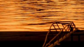 Beautiful Dusk On River Sava With Ducks stock video footage