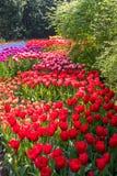Beautiful Dutch flowers Stock Image