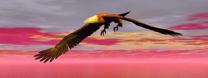 Eagle by sunset - 3D render. Beautiful eagle flying by cloudy sunset Stock Photography