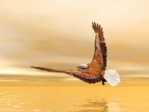Eagle flying - 3D render. Beautiful eagle flying upon the ocean by sunset light Royalty Free Stock Images