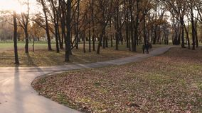 Beautiful early autumn park stock video footage