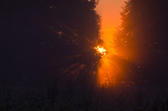 Beautiful early morning sunrise in summer forest Royalty Free Stock Images