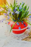 Beautiful early spring flowers,scilla siberica, in red teapot on white table. Beautiful early spring flowers, scilla siberica, in red teapot on white table Stock Photos