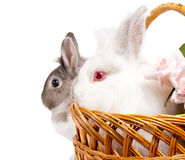 Beautiful Easter Bunny portrait Royalty Free Stock Photos