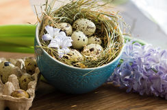 Beautiful Easter composition. Quail eggs in blue bowl and the flower hyacinth. Stock Images