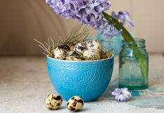 Beautiful Easter composition. Quail eggs in blue bowl and the flower hyacinth. Royalty Free Stock Photography