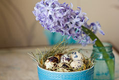 Beautiful Easter composition. Quail eggs in blue bowl and the flower hyacinth. Royalty Free Stock Image