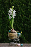 Beautiful Easter eggs with flowers hyacinths on the natural background in shopping cart Stock Images