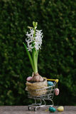 Beautiful Easter eggs with flowers hyacinths on the natural background in shopping cart Stock Photo