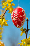 Beautiful Easter eggs hanging from Forsythia Stock Photography
