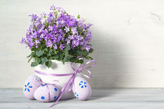 Beautiful easter eggs and spring Campanula flowers on white wooden background Royalty Free Stock Photos