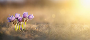 Beautiful Easter flowers banner Stock Images