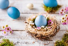 Happy Easter - Fresh turquoise greeting card. Beautiful easter greeting card with blue eggs and a natural easter nest on a wooden table and blue background Stock Photography