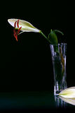 Beautiful easter lilly flower stock images