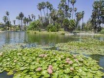 The beautiful Echo Park Lake Royalty Free Stock Image