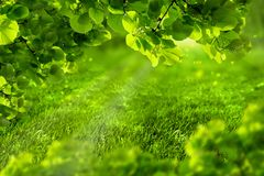 Beautiful eco green defocused spring or summer background with sunshine. Juicy young grass and foliage in rays of sunlight. Nature. Background. Soft toned. Copy stock photos