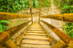 Beautiful and ecological stairs made of cane guadua in Mindo recreation place, in western Ecuador, at 1,400m elevation Stock Image