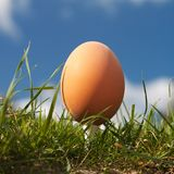 Beautiful Egg. Brown egg in green grass on golf tee. Blue sky with some clouds stock photo