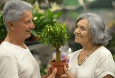Elderly couple choosing plants Stock Photography