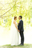 Beautiful elegant bride and groom holding hands under tree Royalty Free Stock Image