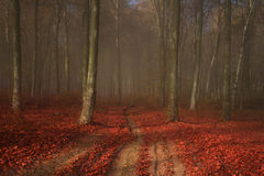 Beautiful elegant foggy forest with red leaves. Autumn mist in a romantic forest with red leaves on the ground royalty free stock image