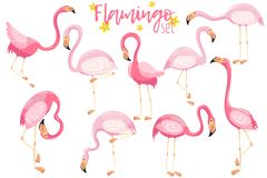 Beautiful elegant pink flamingos set, exotic tropical birds vector Illustrations. On a white background Royalty Free Stock Photography