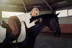 Beautiful elegant young blonde girl lies on a her black horse dressing uniform competition white blouse shirt and brown pants. Stock Photography