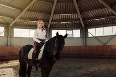Beautiful elegant young blonde girl sits on a her black horse dressing uniform competition white blouse shirt and brown pants. Stock Photo
