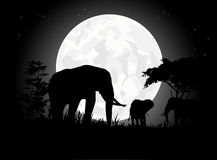 Beautiful Elephant family silhouettes with giant moon background Stock Image