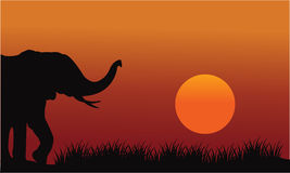 Beautiful elephant in hill scenery Stock Images
