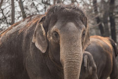 Beautiful elephant at zoo in Berlin. Germany Stock Image
