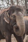 Beautiful elephant at zoo in Berlin. Germany Stock Photo