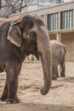 Beautiful elephant at zoo in Berlin. Germany Stock Images