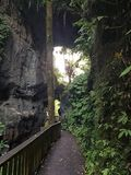 Beautiful Elevated Walkway Through Pristine Cave & Forest royalty free stock images