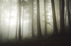 Enchanted Transylvanian beech tree forest with fog Stock Image