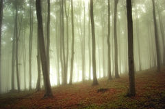 Beautiful enchanted fores with fog in autumn Stock Photos