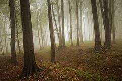 Beautiful enchanted forest with fog in autumn Stock Image