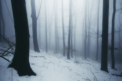 Winter wonderland forest with fog. Beautiful enchanted winter wonderland forest with snow and fog in blue evening royalty free stock photography