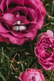 Beautiful engagement ring with a diamond close-up with a wedding gold ring in a pink rose lying on the grass stock photos
