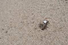 Beautiful Engagement Ring in Sand Stock Images