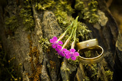 Beautiful engagement rings on tree bark Royalty Free Stock Images