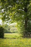 Beautiful English countryside landscape image of meadow in Sprin Royalty Free Stock Photos