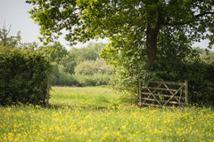 Beautiful English countryside landscape image of meadow in Sprin. English countryside landscape image of meadow in Spring sunshine Royalty Free Stock Photography