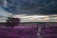 Beautiful English countryside landscape over fields at sunset wi. Stunning English countryside landscape over fields at sunset with surreal purple tint concept Royalty Free Stock Photo