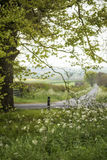 Beautiful English countryside landscape view through trees to fi Stock Image