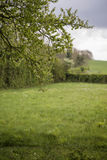Beautiful English countryside landscape view through trees to fi Royalty Free Stock Photography
