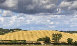 Beautiful English Landscape with striped hill after harvest, tre. Es and hedgerow under a broad cloud studed blue sky Stock Image